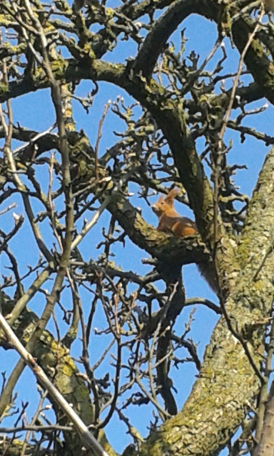 Squirrel tree nature no people day outdoors close-up photography photo♡ photoart phone photography photo photooftheday Amazing Poland Girl Photographer Sunday Sundaymorning Sun