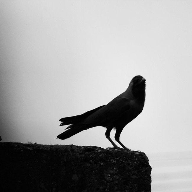 Instapic Instaman Me Fort Aguada Goatourism LoveGoa GOGOA Shadow Crow B &WNofilter