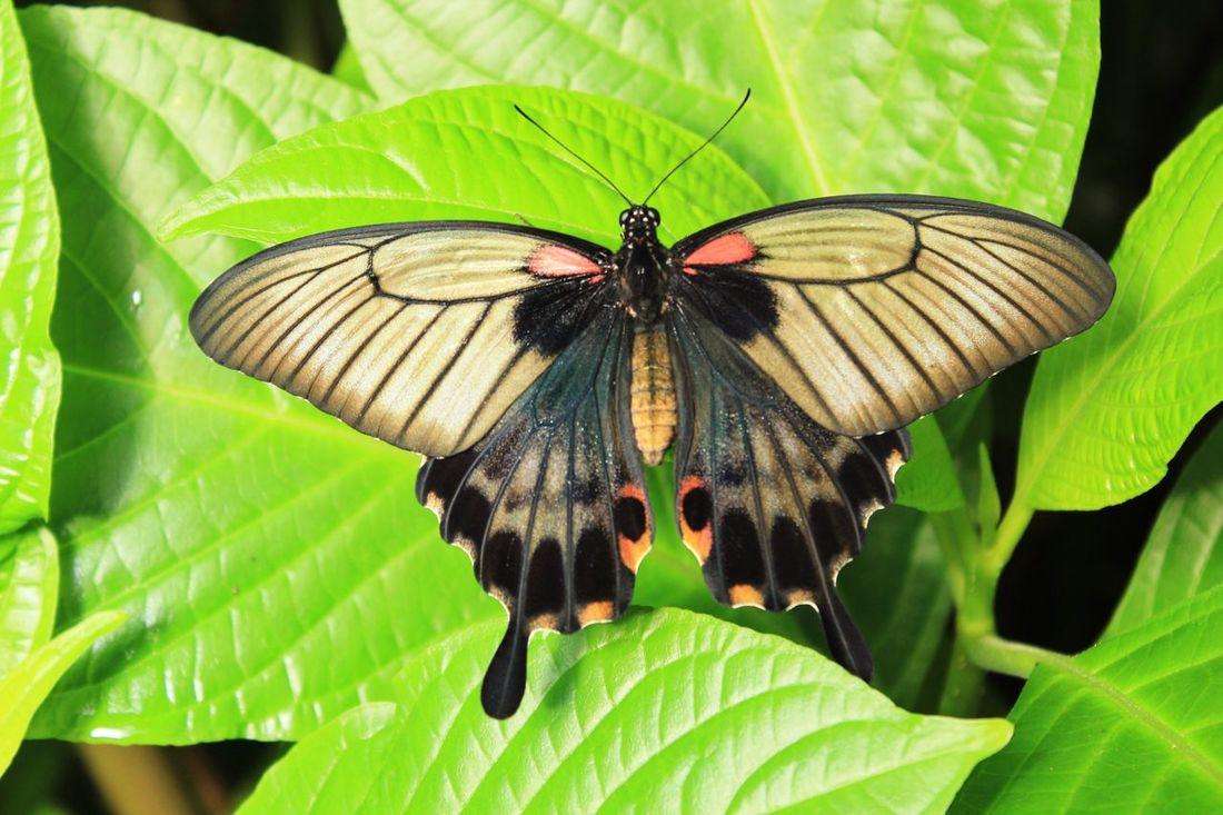 Butterfly Butterfly ❤ Butterfly Garden Butterfly Pavilion