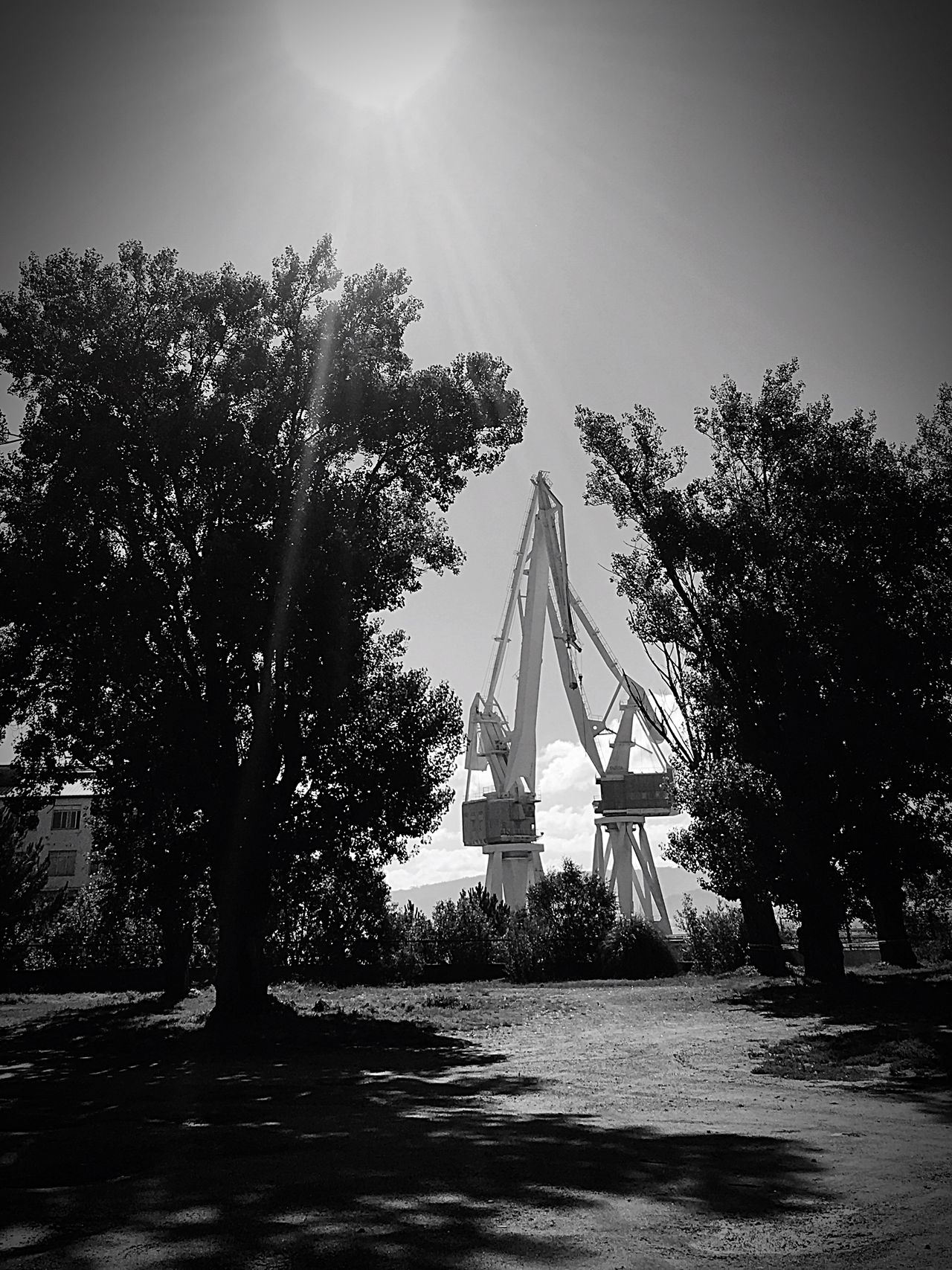 Hi! Taking Photos Black & White What could have been and was not Enjoying Life Nature Landscape Hidden Gems  Landscape_photography Landscape_Collection Black And White Black And White Collection  Blackandwhite Photography Bnw_captures Bnwphotography Bnwportrait Blackandwhite Crane Sky Ferrol  Shadow Tree