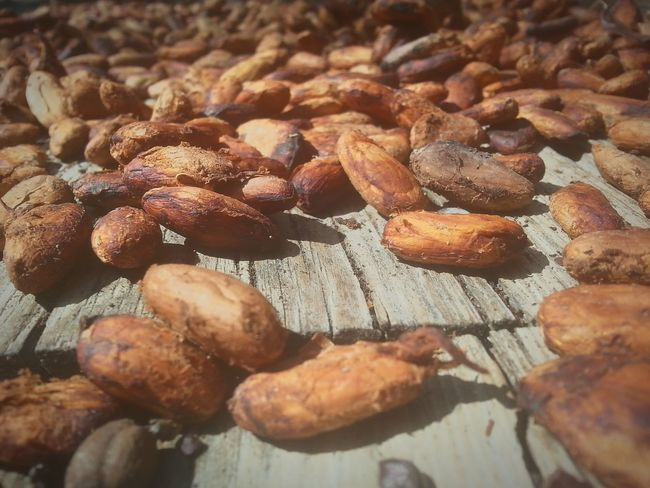 Cacao seed Relaxing Taking Photos Check This Out Vnmaphotography Cacao Beans Seed Nature_collection Naturelovers Delicious ♡ Photography Eye4photography  Eyeemphotography EyeEm Best Shots - Nature Follow4follow Like4like