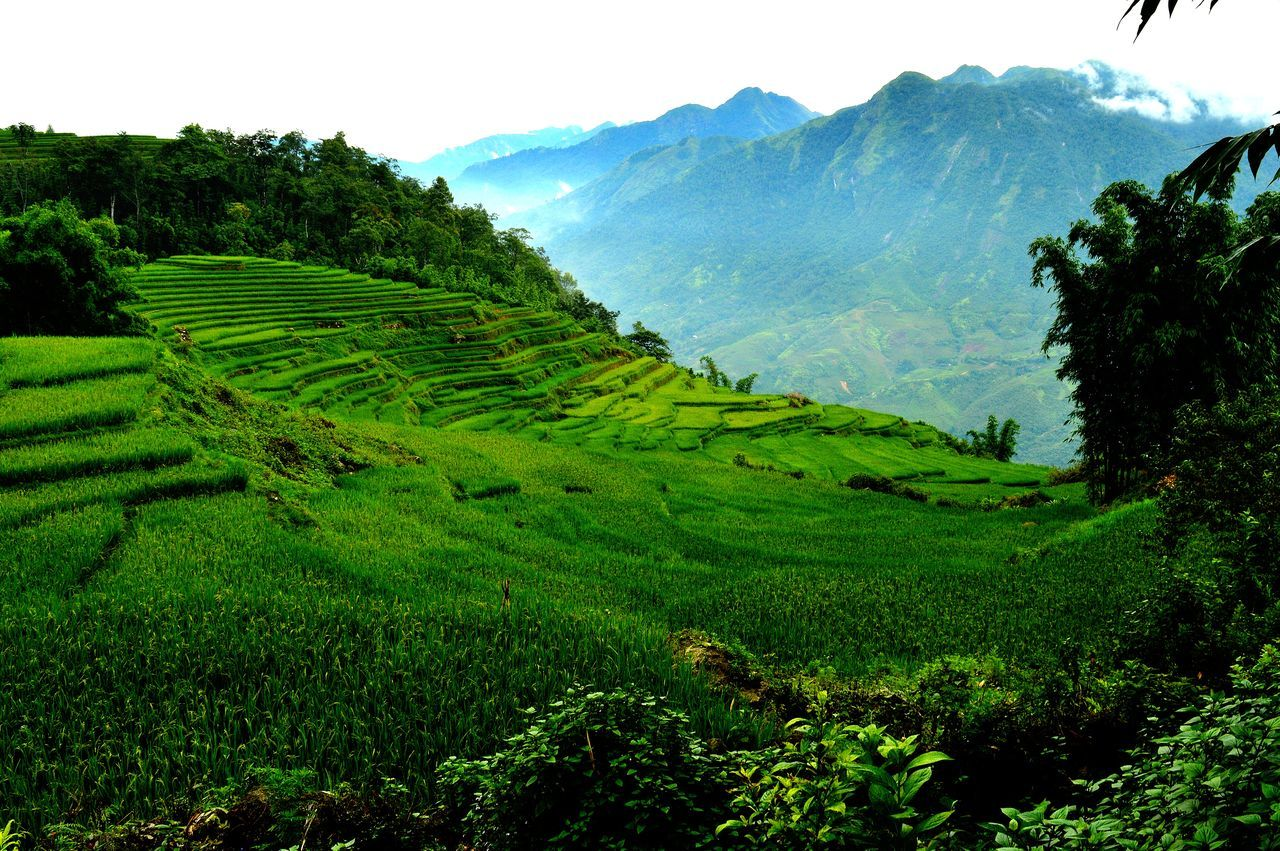agriculture, landscape, mountain, nature, farm, field, terraced field, beauty in nature, growth, scenics, rice paddy, no people, tranquil scene, rice - cereal plant, plant, tranquility, outdoors, day, rural scene, sky