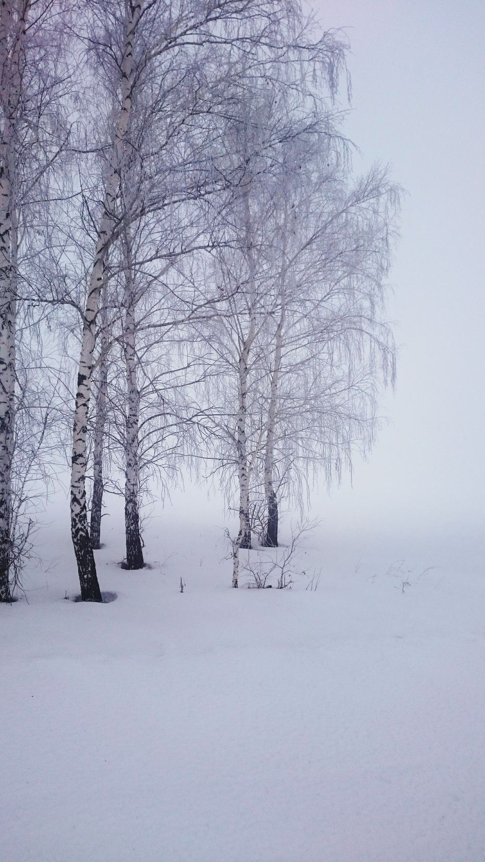 Tree Cold Temperature Snow Nature Winter No People Bare Tree Forest Branch Snowing Beauty In Nature Day Outdoors FromRussiaWithLove лес и природа береза туман зима