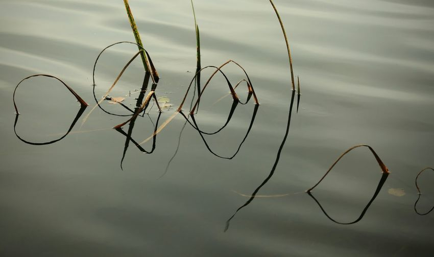 Reflections And Water Beauty In Nature Eyem Nature Lovers  Lost In The Landscape 3XSPUnity Taking Photos Close-up Nature Photography Nature Photograhy Nature Reflections In The Water Sillouettes Sillouettes And Shadows
