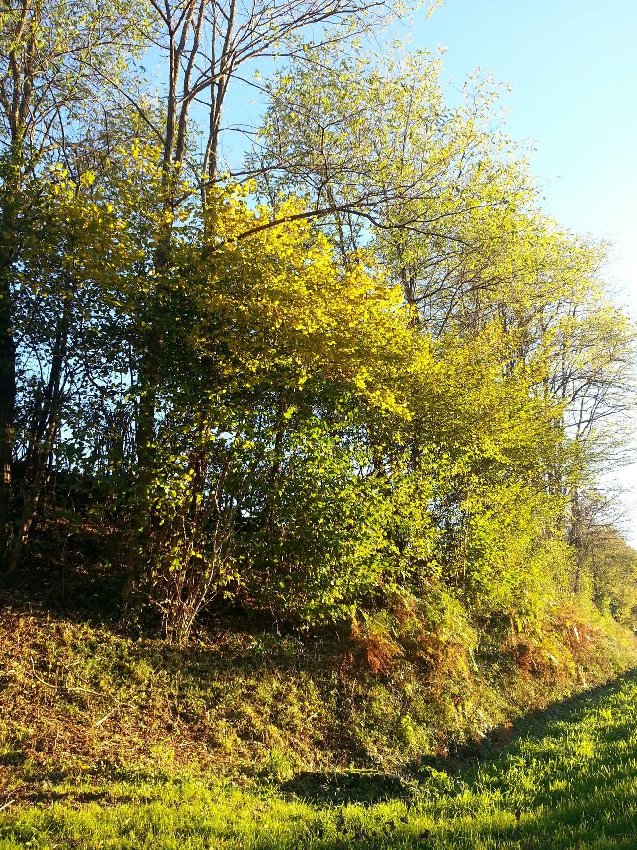 Tree Enjoying The Sun No Filter