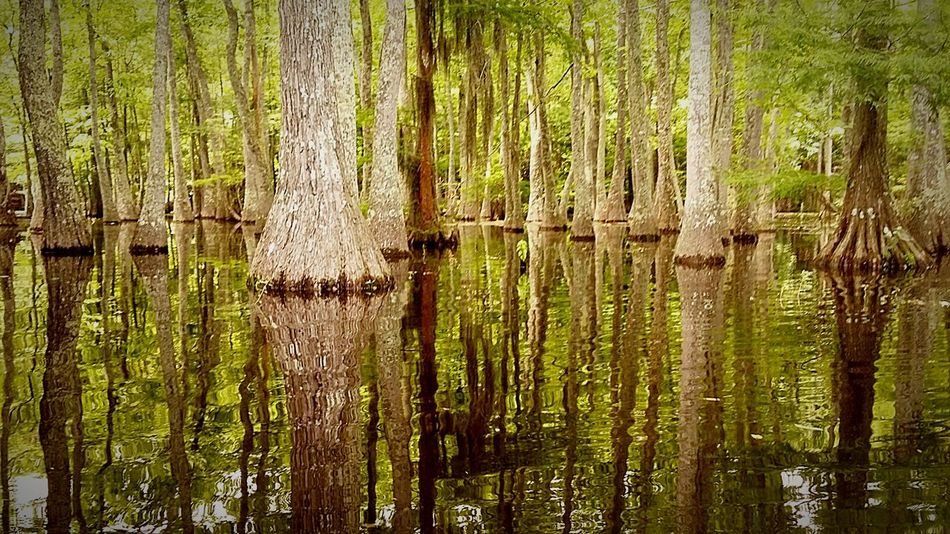 The Great Outdoors - 2016 EyeEm Awards The Essence Of Summer- 2016 EyeEm Awards Eerie Trees Eerie Scene Reflections In The Water Reflection Marshlands Swamp Reflections