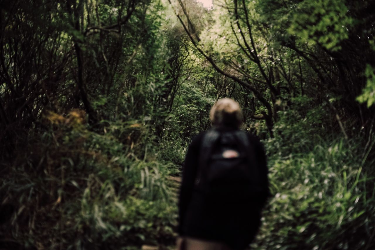 Into the jungle. Forest Tree Jungle Nature Outdoors Madeira Travel Destinations Travel Portugal The Week Of Eyeem 35mm Adventure One Person Woman Girl Fjällräven Hiking Climbing Green Green Color Blonde Wild Wildlife Traveling