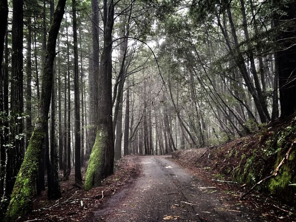 Country Road Country Road Country Living Rainy Days Trees Foresthills Forest Forest Photography Forest Drive Driving Through The Hills Driving Through The Forest Mist And Shadow Redwoods Moss Covered Tree Nature Photography ShotOniPhone6