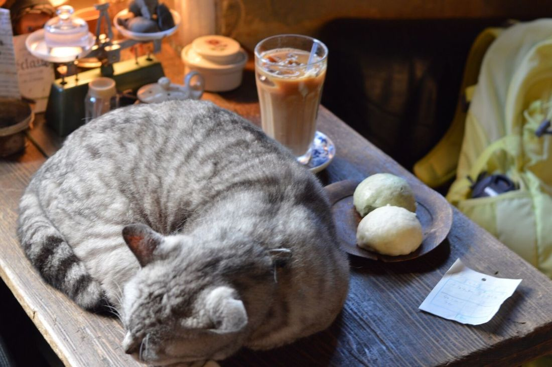 icecoffee and steamed(bean-jam)bun and cat. 🐈 Ice Coffee Coffee Time Steamed Bun Manju Cat Cat♡ Cat Lovers Catlovers Love Cafe Cafe Time Cute Cute Cats Antique Nikon Nikonphotography Nikon D3200 Catphotography