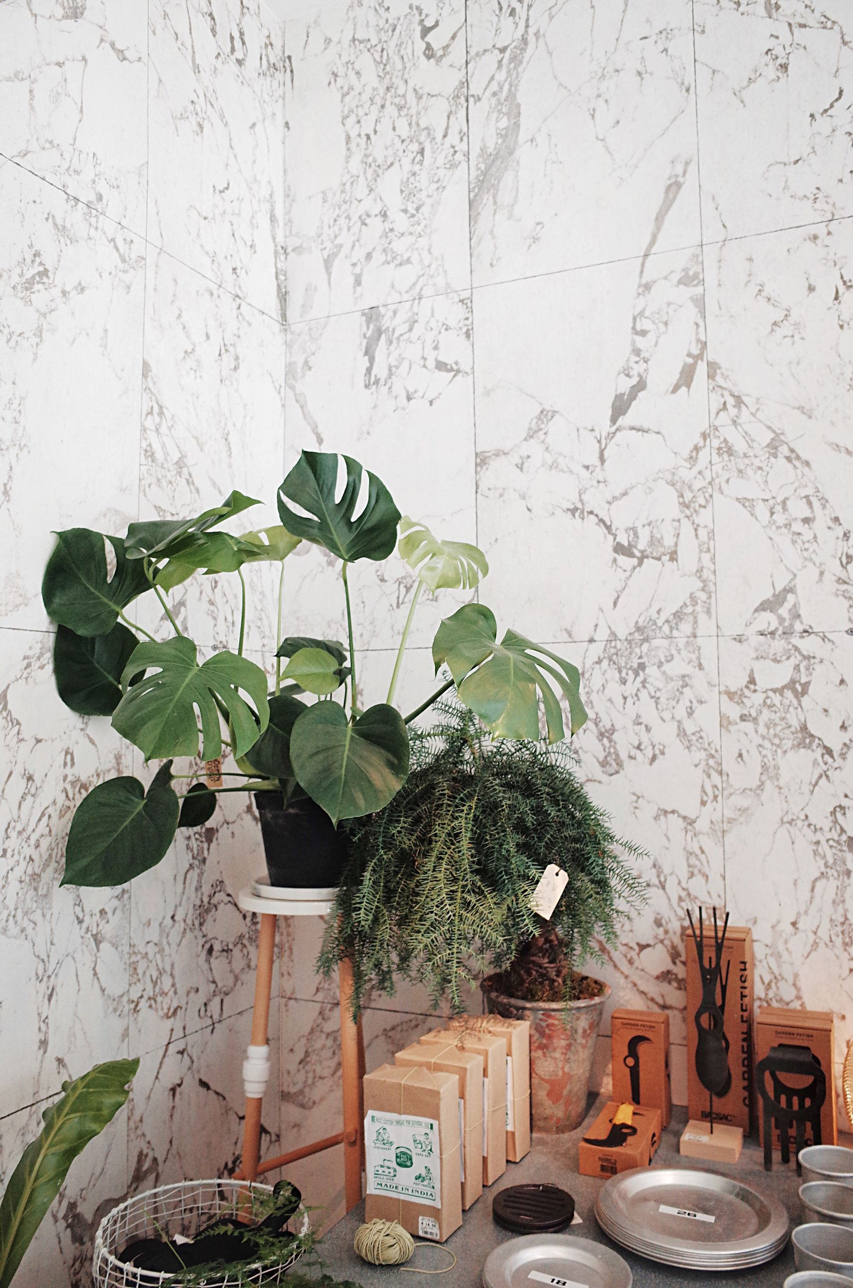 leaf, indoors, wall - building feature, potted plant, architecture, table, built structure, flower, vase, flower pot, houseplant, plant, flower arrangement, pot plant, bouquet, day, no people, house plant, fragility, freshness