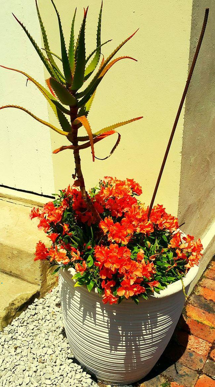 Flowers in Spring!! First Eyeem Photo