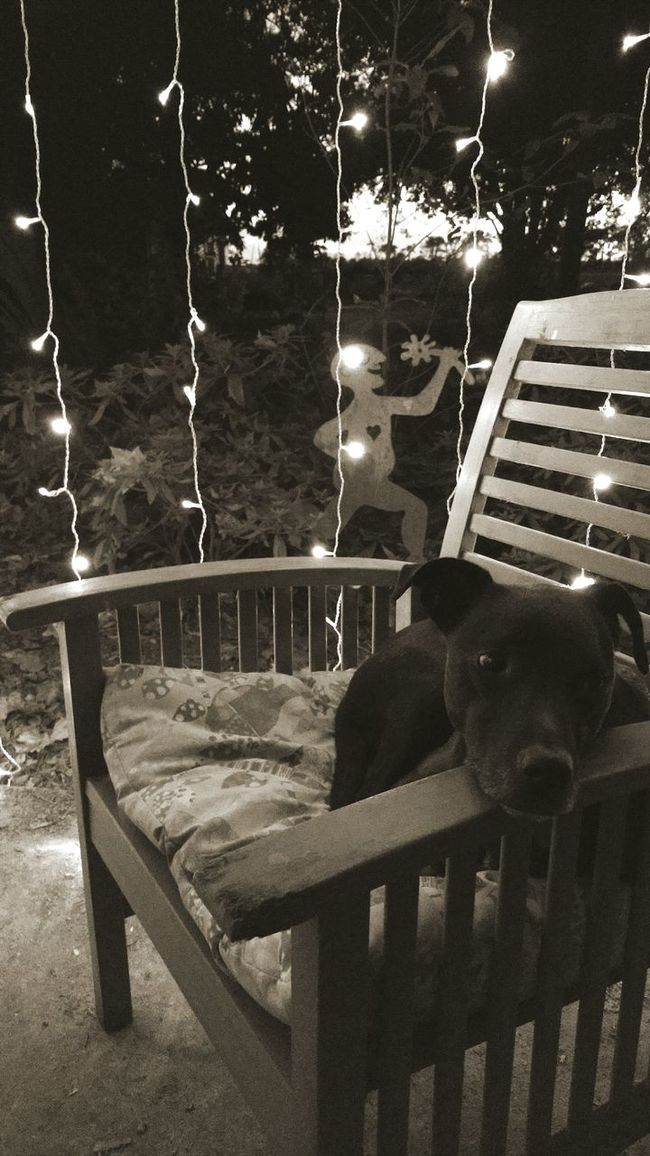 Bonnie in Fairy Light Autumn Nights Dog People Person Dog Light Black And White Photography Crickets Peace Of Mind Alive And Glad To Be Every Day Love To All