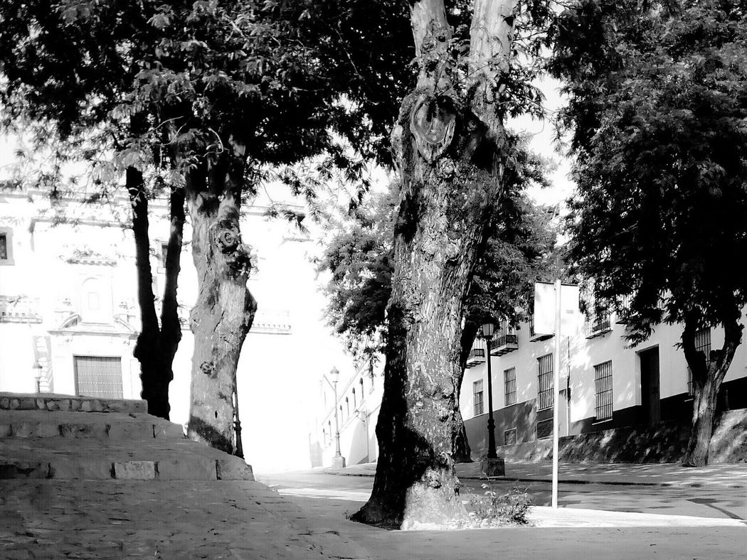 What do you look for? Scenery PAISAJE URBANO Paisaje Natural Trees Arboles En Primavera Arboles Cuesta Blackandwhite Black&white Free