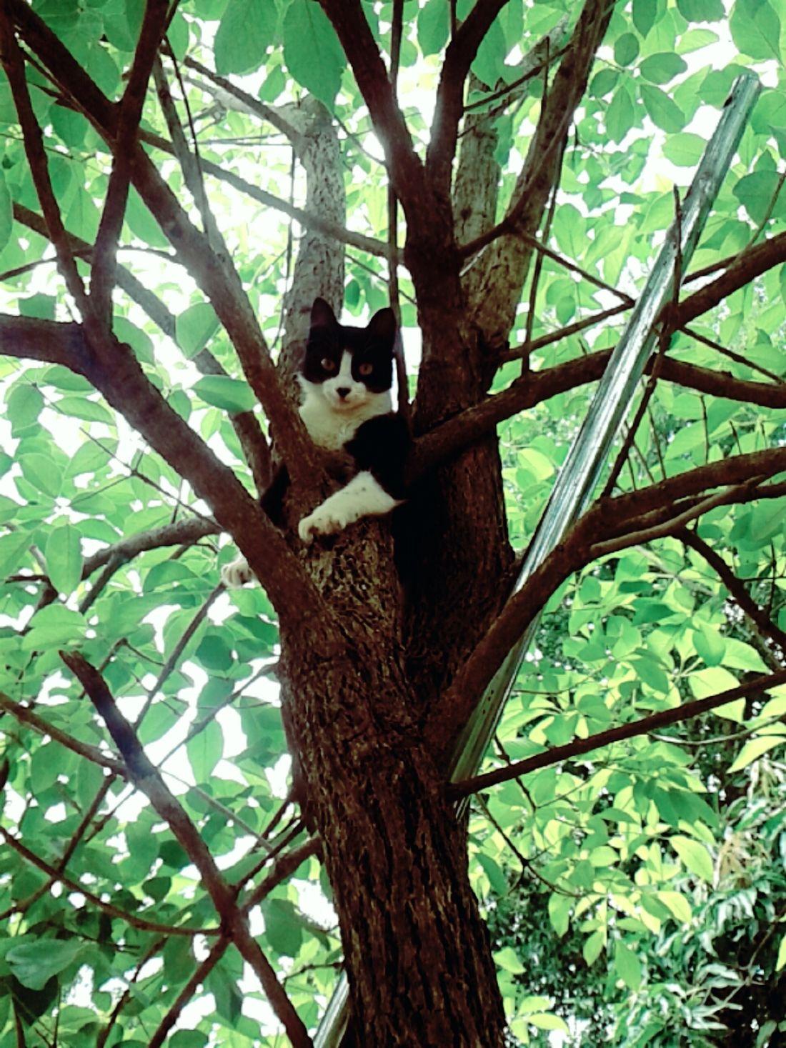 EyeEm Nature Lover EyeEm Cute Cats EyeEm Animal Lover Caaguazu Paraguay