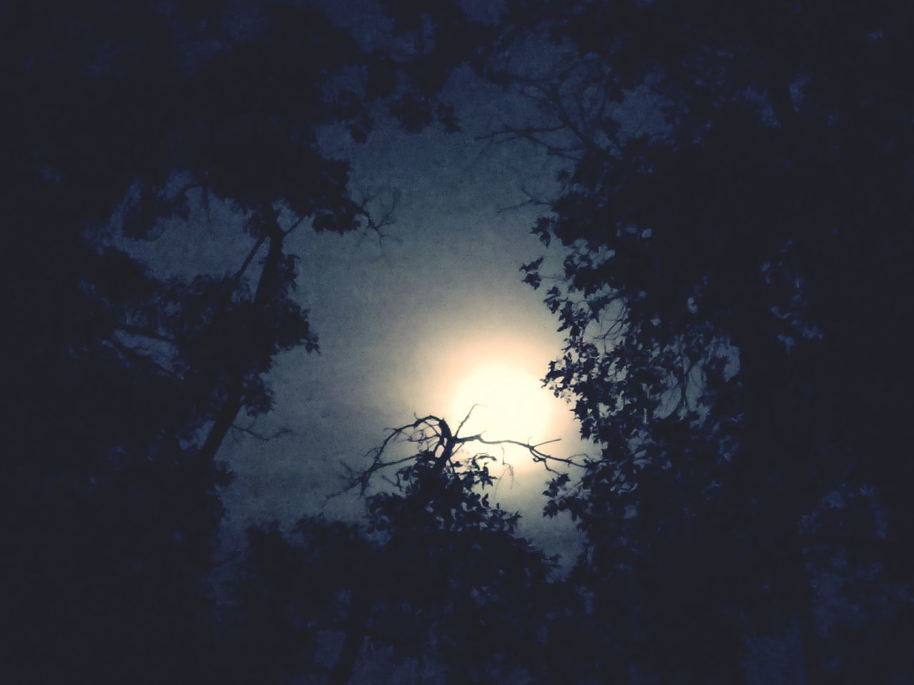 Moonlight Solace Moonthroughtrees Black And White Night Photography Branches And Sky Moon Shots Moonshine