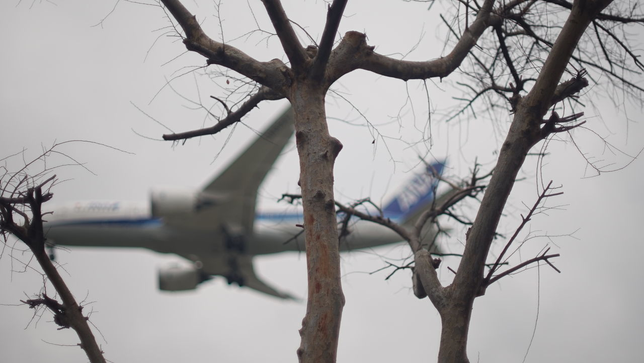 Enjoy The New Normal Cold Temperature Sky Bare Tree Branch Tree Trunk Nature Winter Tree Flightclub Journey Airplane Take Off Fragility Flying Adventure Air Vehicle Flight