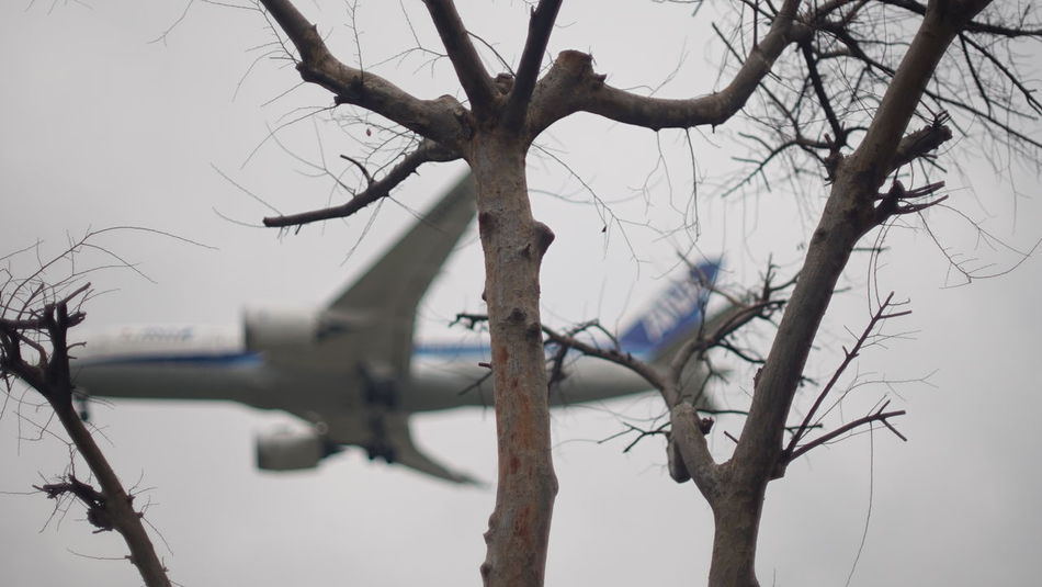 Enjoy The New Normal Cold Temperature Sky Bare Tree Branch Tree Trunk Nature Winter Tree Flightclub Journey Airplane Take Off Fragility Flying Adventure Air Vehicle Flight Finding New Frontiers Close Up Technology Adapted To The City