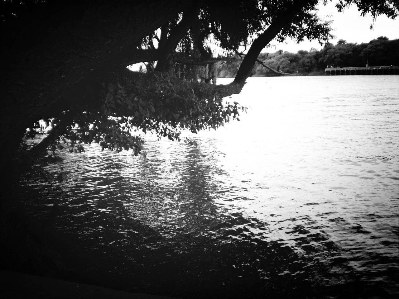 tree, water, nature, tranquility, tranquil scene, no people, outdoors, lake, scenics, day, beauty in nature, sky
