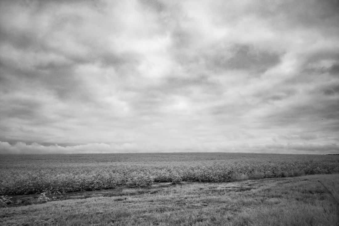Black & White Black And White Black And White Photography Blackandwhite Blackandwhite Photography Cloud Cloud - Sky Cloudscape Cloudy Field Grass Horizon Over Land Infrared Infrared Photo Infrared Photography Landscape Nature Non Urban Scene Non-urban Scene Outdoors Overcast Rural Scene Sky Tranquility Weather
