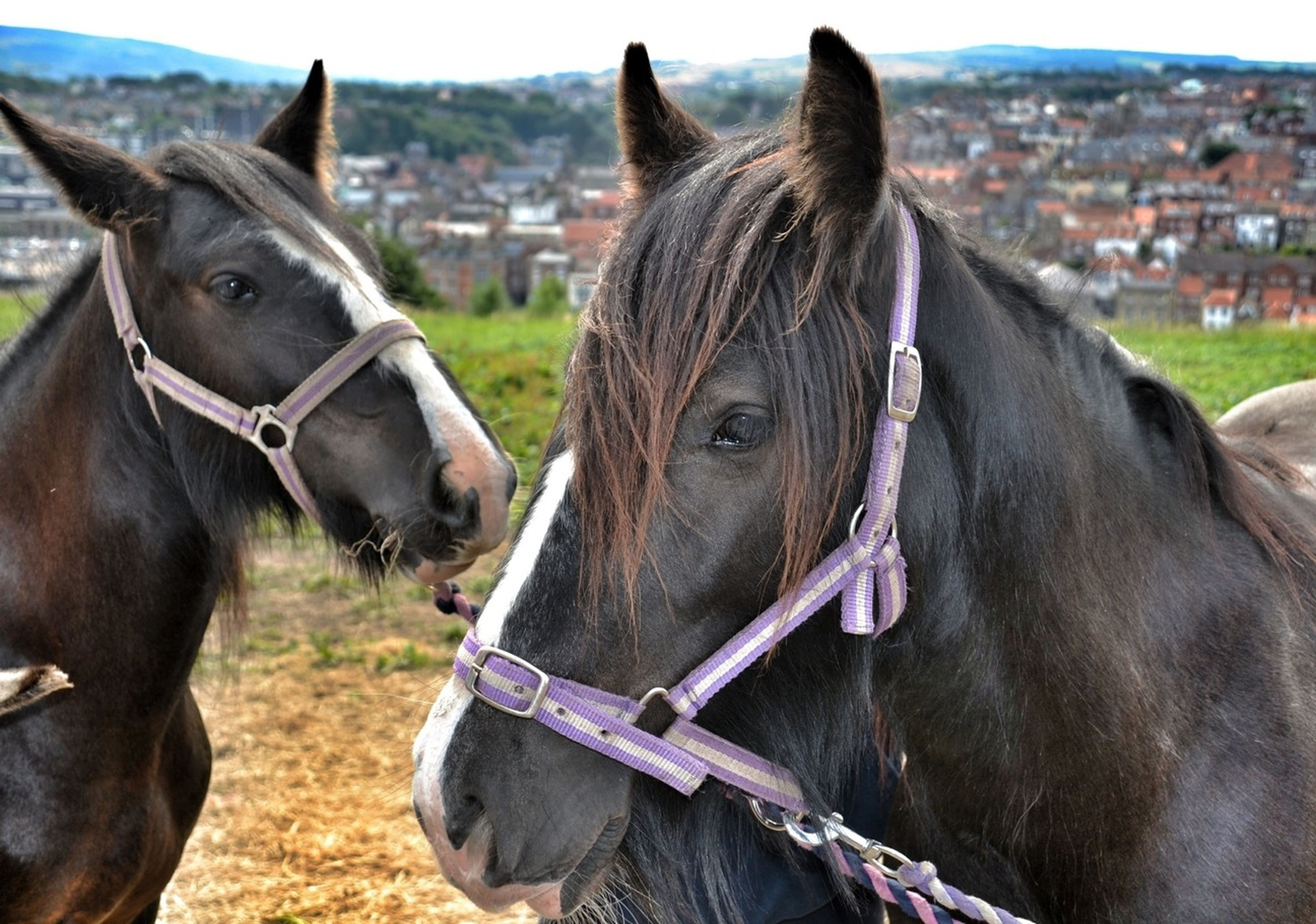 Scenery Shots Horse Horses Eye4photography