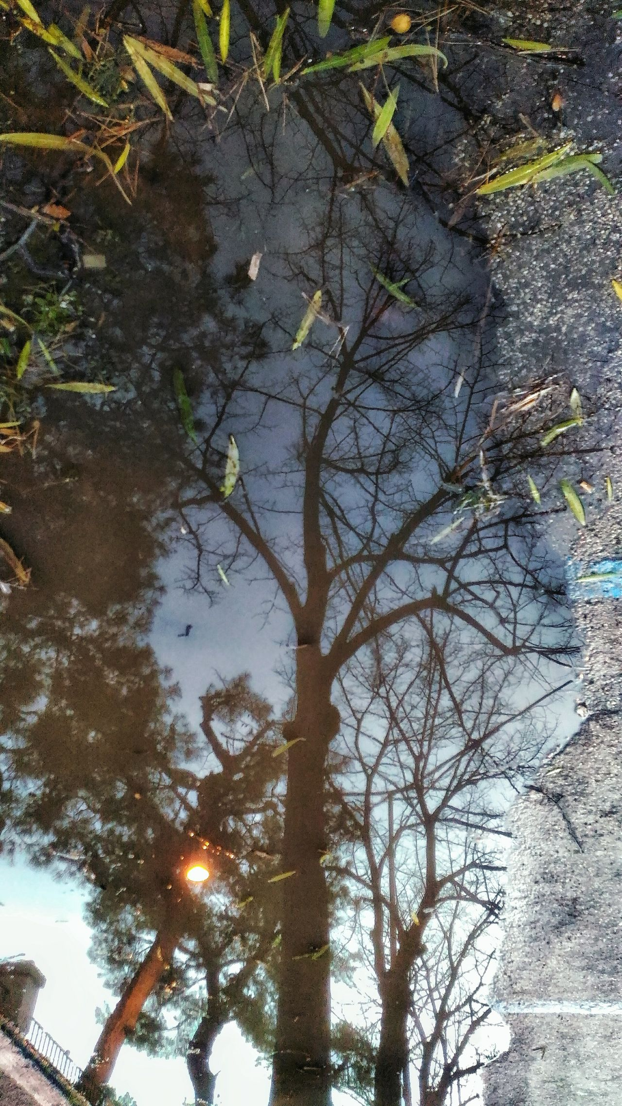 Water Reflections Tree Nature No People Outdoors Beauty In Nature Tranquility Van Gango Tree Reflection In A Puddle Leaves In Puddle Sky Italy🇮🇹 After Rain