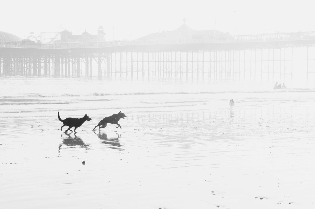 domestic animals, dog, animal themes, water, pets, mammal, sea, outdoors, nature, beach, day, no people, beauty in nature, sky