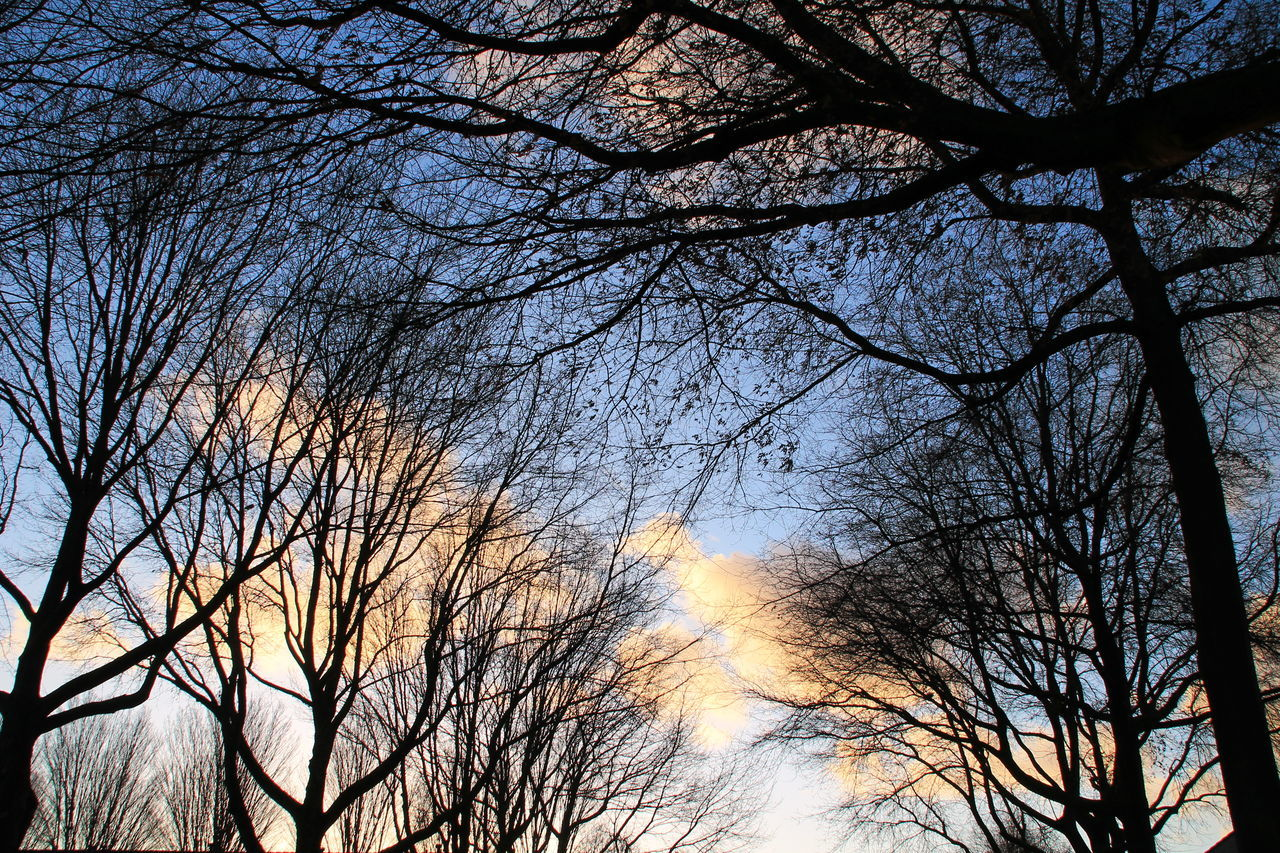 bare tree, tree, branch, low angle view, sky, nature, beauty in nature, no people, tranquility, outdoors, tranquil scene, silhouette, scenics, day