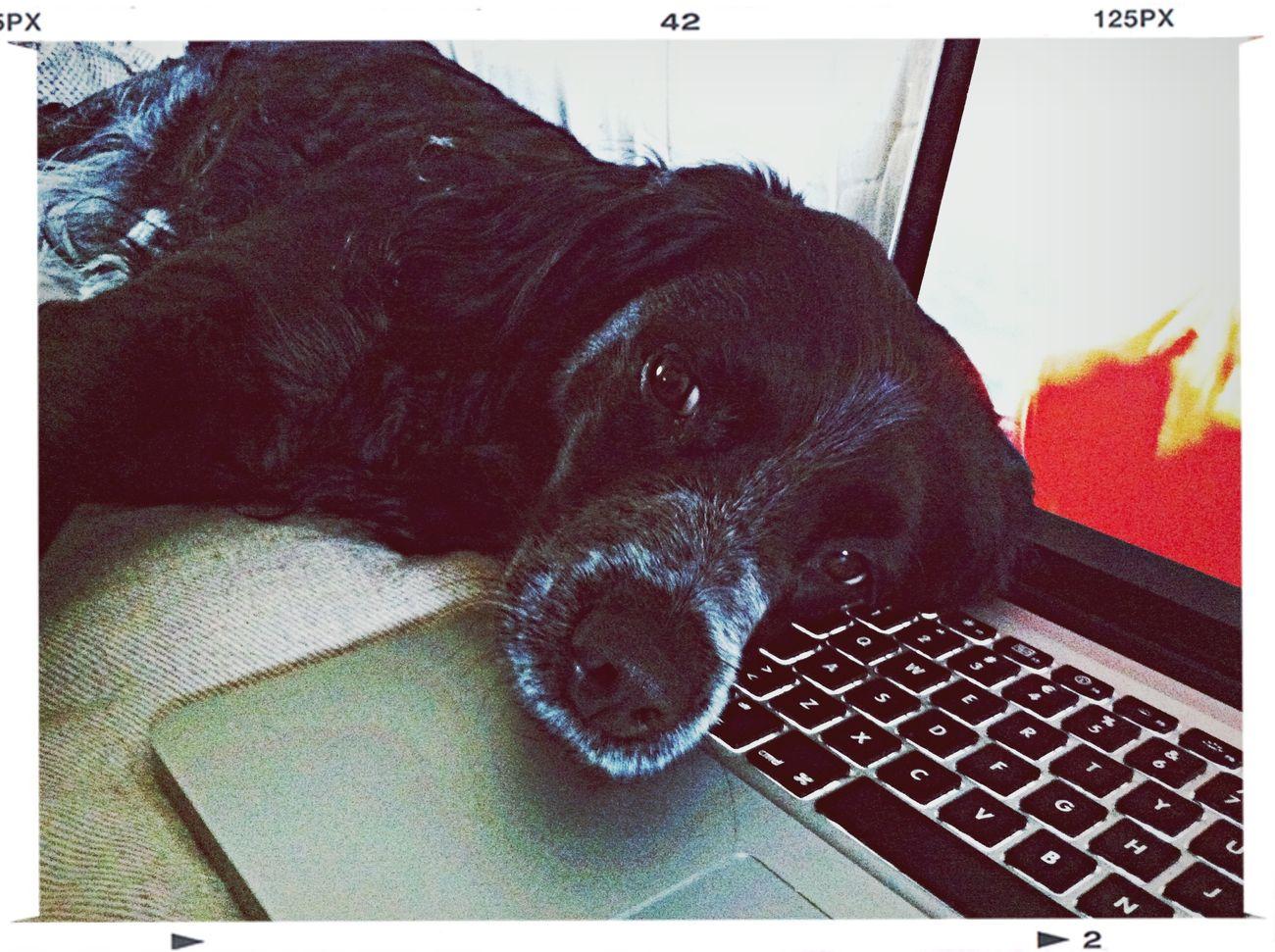 Dog @work what an Beautiful Animal