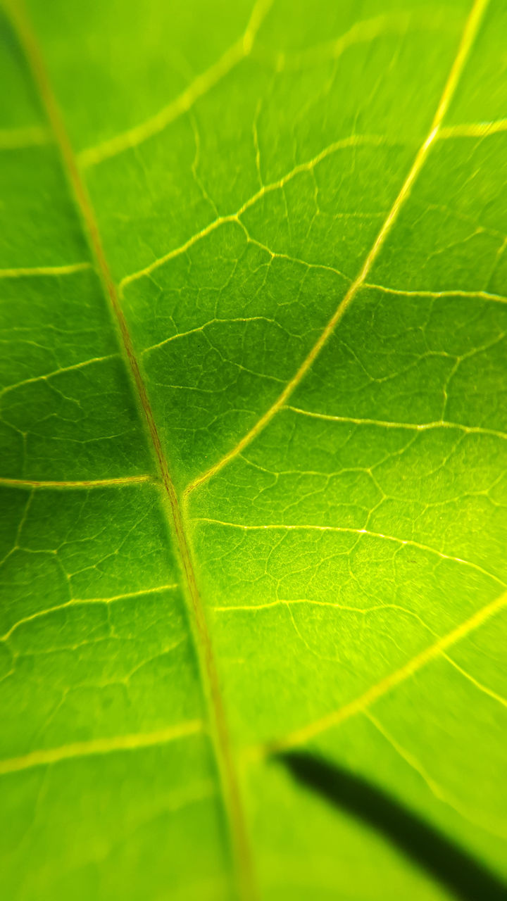 leaf, green color, close-up, nature, no people, day, freshness