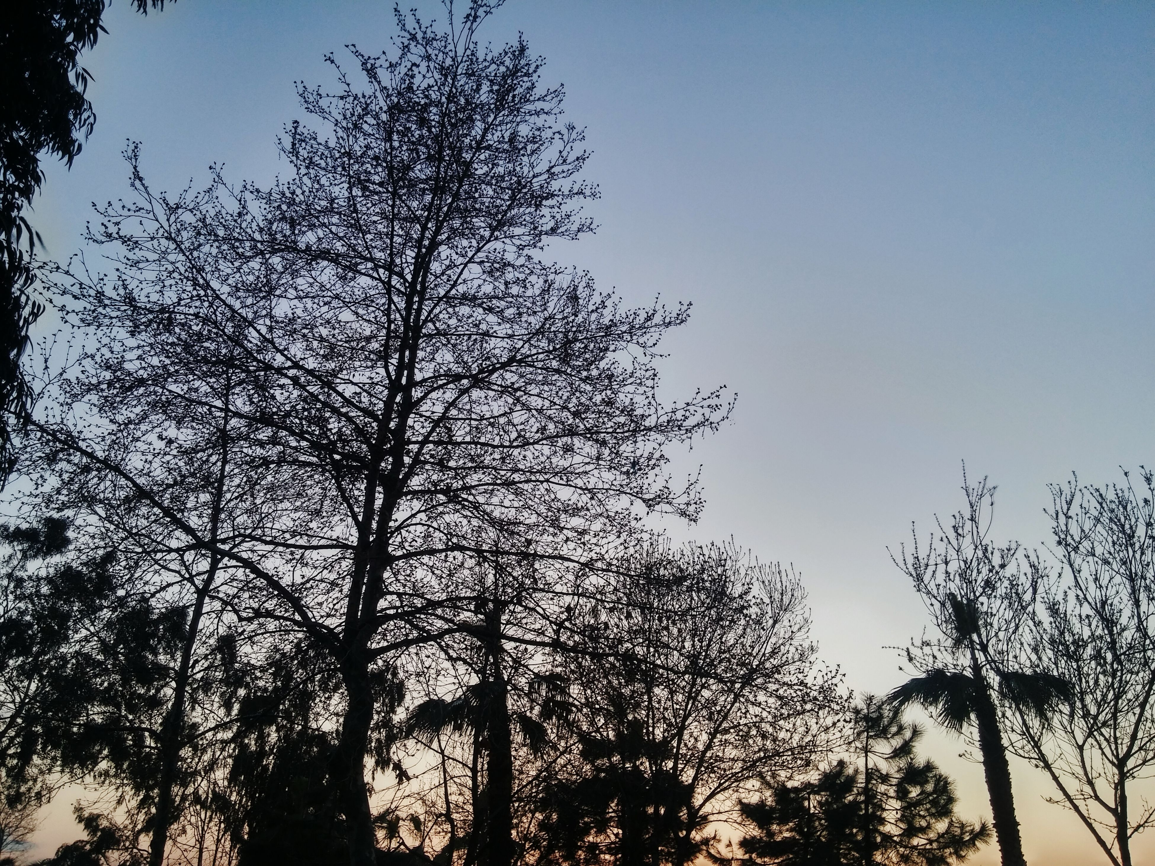 sky, nature, low angle view, tree, growth, no people, outdoors, sunset, silhouette, day, beauty in nature, close-up
