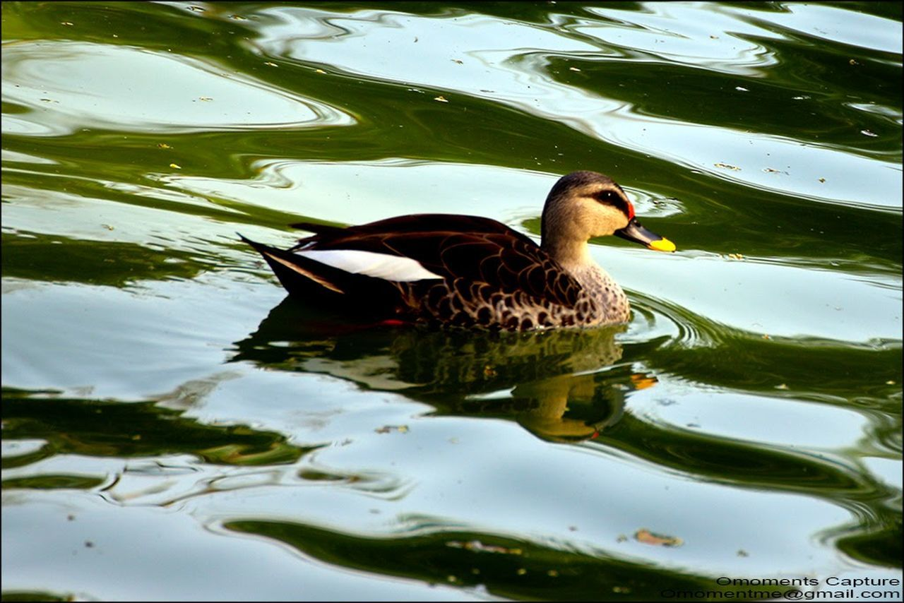 Hanging Out Taking Photos Check This Out Photography Duck Pond Hauzkhasvillage Deerpark Nature Love ♥