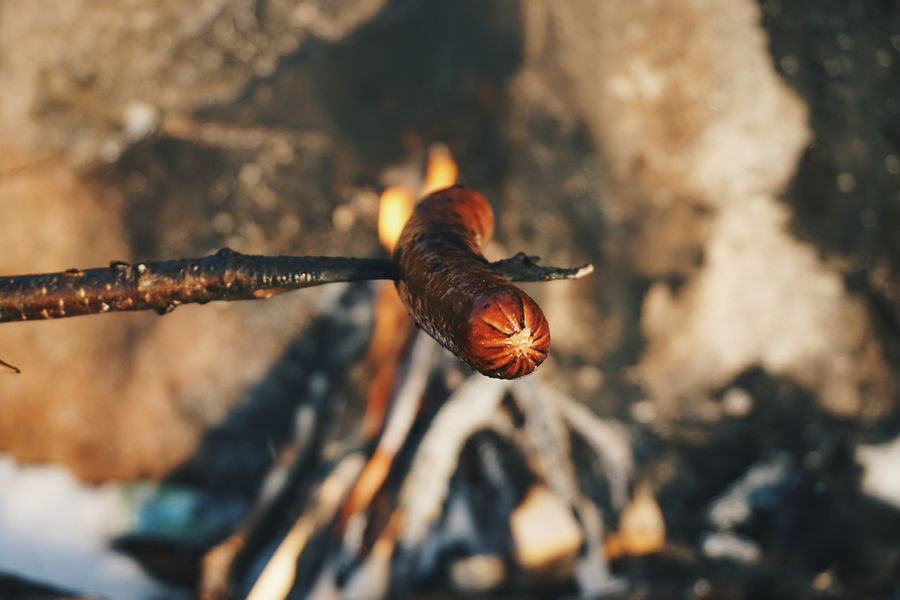 Outdoors Nature Day Beauty In Nature Close-up No People Outdoor Photography Flames Campfire Flames Flame Campfire Woodfire Grilling Outside Fire Grilling Out Sausage Food Grilling Cold Temperature Beauty Of Nature Winter Tranquil Scene Food And Drink Forest Photography Tranquility