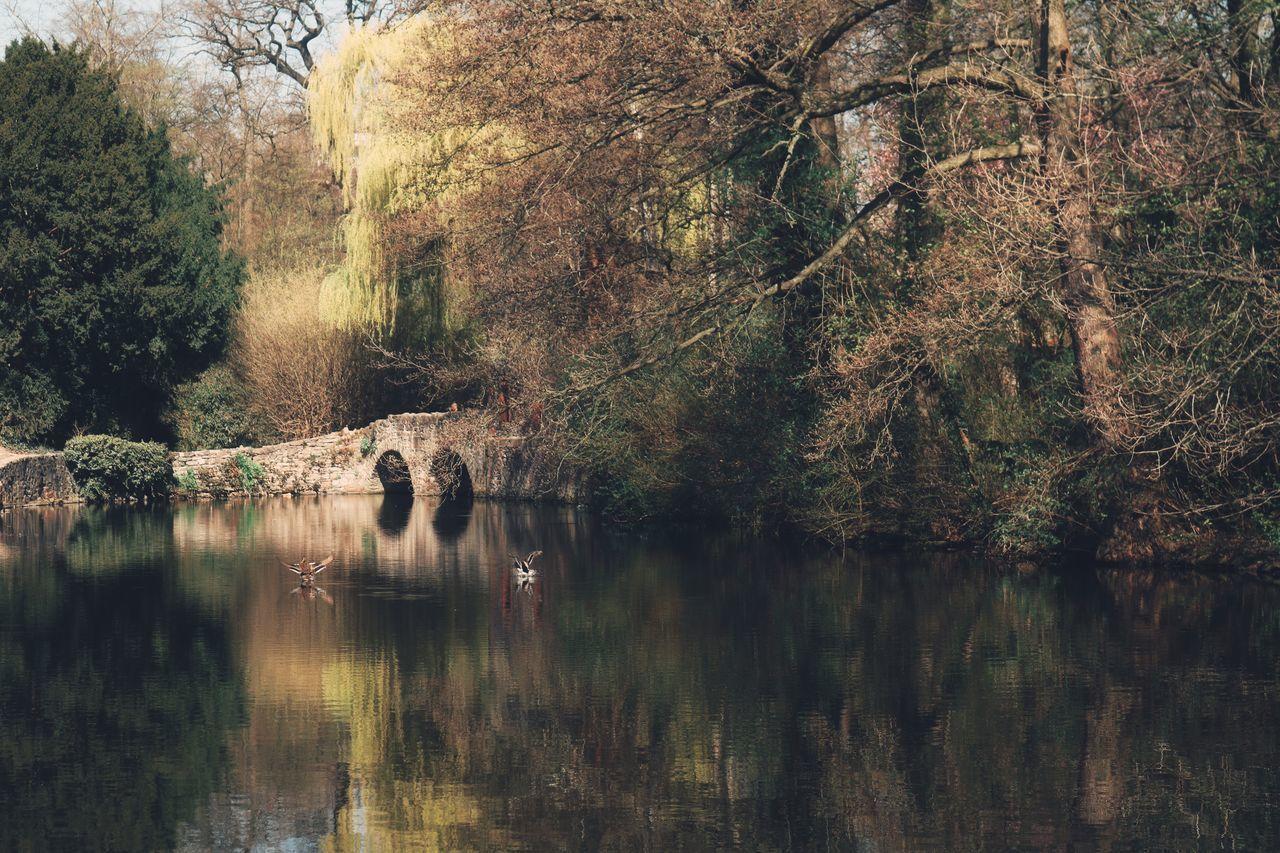 Was wir in der Arbeitszeit tun, macht uns zu dem, was wir haben. Was wir in den Mußestunden tun, macht uns zu dem, was wir sind. (Unbekannt) In diesem Sinne, liebe Freunde, freue ich mich auf die nächste Arbeitswoche und mein Mittagspausenglück. Euch allen wünsche ich noch einen schönen Restsonntag! Einen freudigen Gruß von der Moni 🙋🌞 A Walk In The Park Ducks Ducks At The Lake Eye4nature Eye4photography  EyeEm Best Shots - Nature EyeEm Gallery Eyeem Nature EyeEm Nature Lover For My Friends 😍😘🎁 In The Park Ladyphotographerofthemonth Mittagspausenglück My Favorite Place Nature On Your Doorstep Naturephotography Poetry In Pictures Silent Moment Take A Break Take A Walk Tranquil Scene Untamed Heart