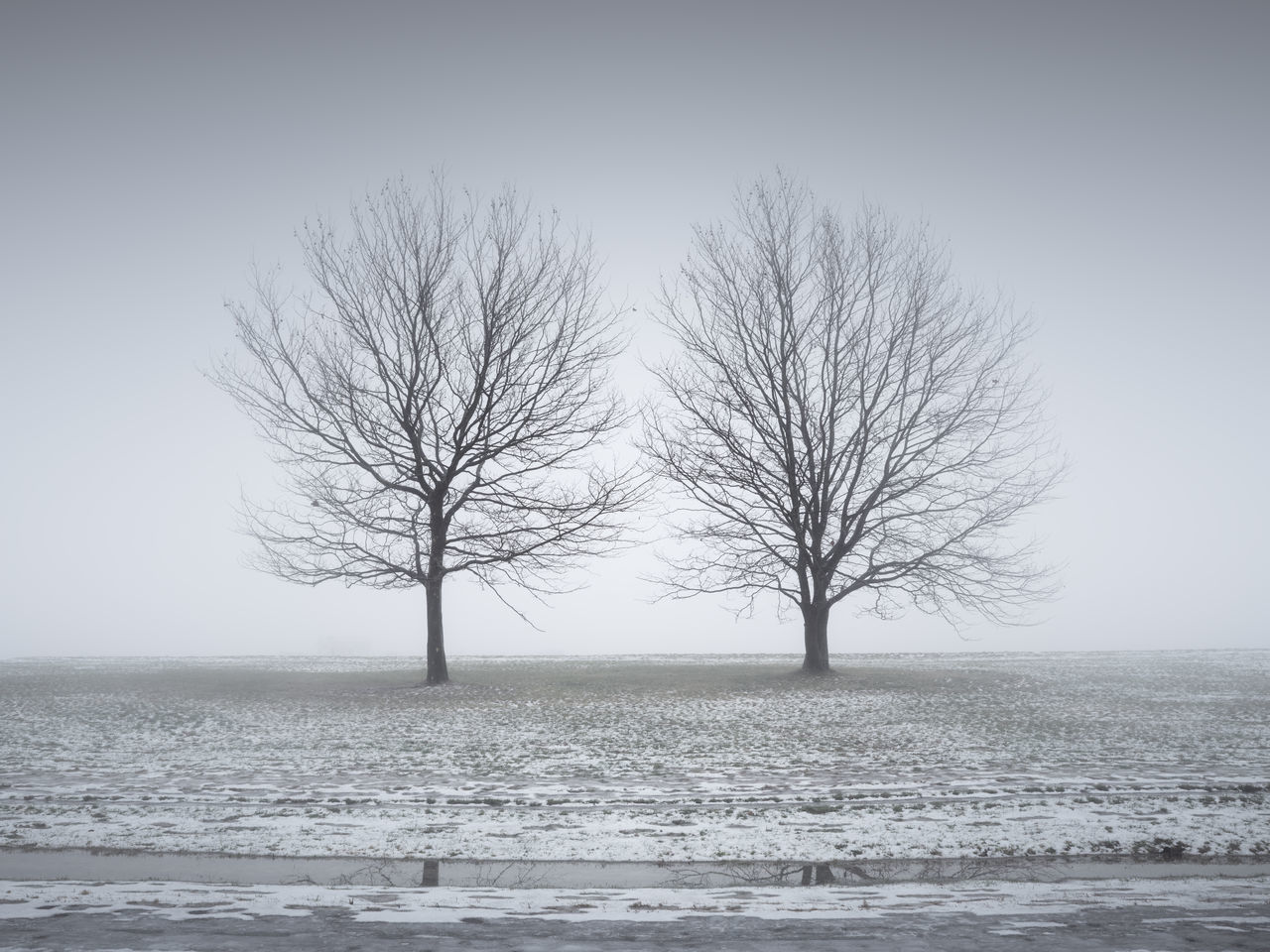 bare trees on field during winter Bare Tree Beauty In Nature Branch Clear Sky Cold Temperature Day Isolated Landscape Lone Majestic Muted Colors Nature No People Outdoors Philipp Dase Remote Scenics Sky Snow Solitude Tranquil Scene Tranquility Tree Tree Trunk Winter