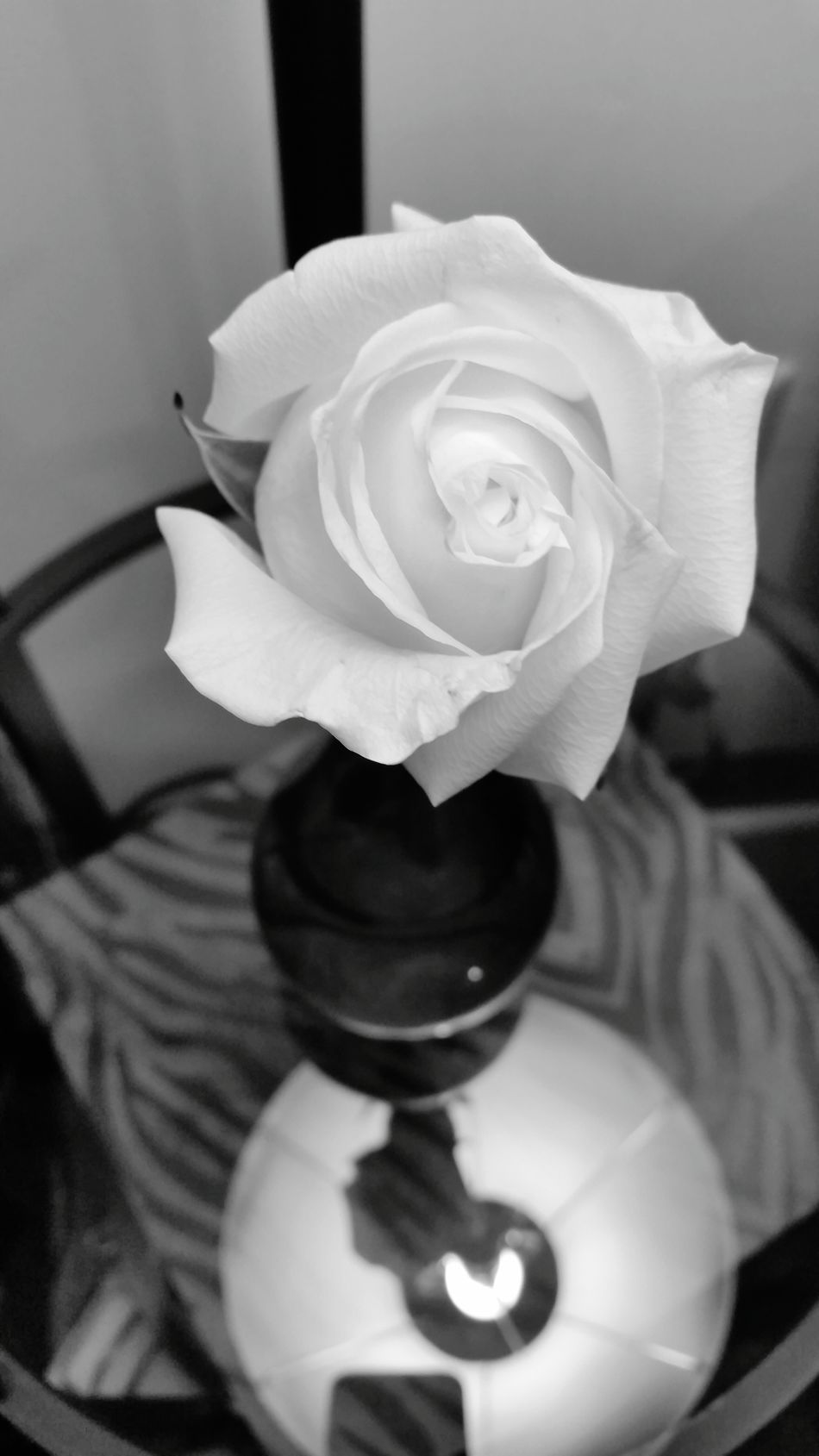 Flowerporn Rose🌹 Enjoying Life Hello World Bfb , Natural Beauty