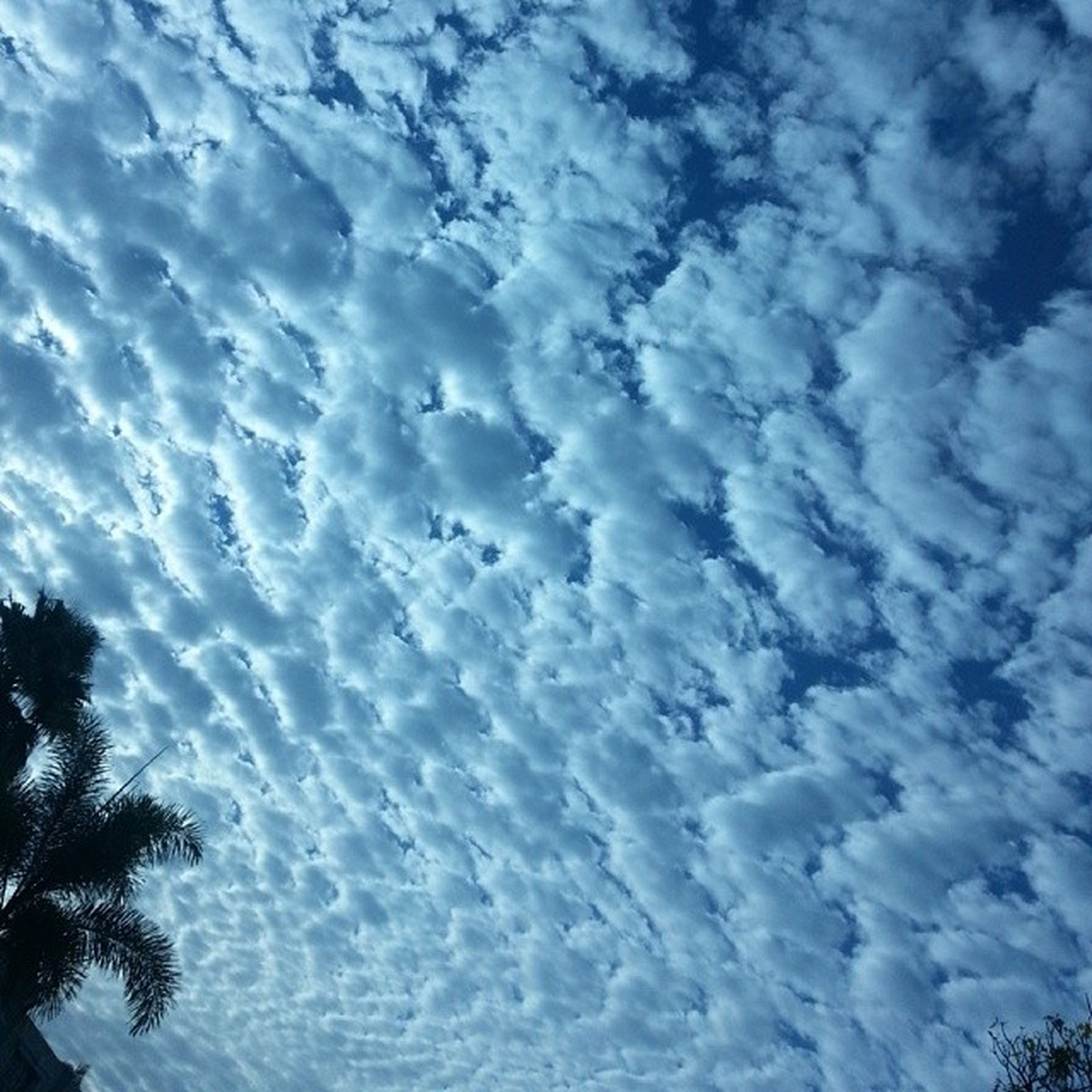 sky, beauty in nature, cloud - sky, full frame, tranquility, low angle view, scenics, backgrounds, nature, tranquil scene, blue, cloudy, sky only, idyllic, cloud, day, outdoors, cloudscape, no people, majestic