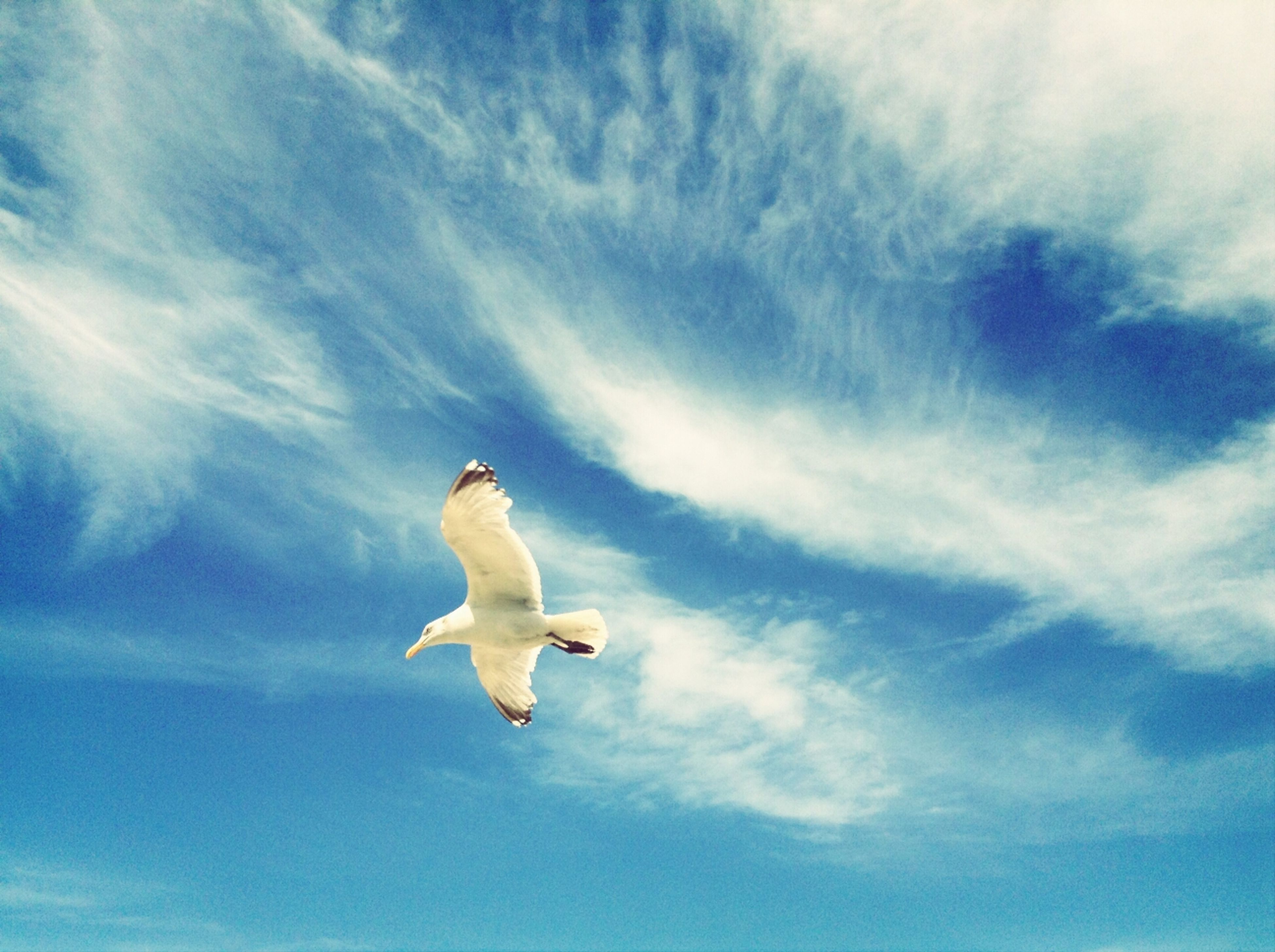 bird, animal themes, animals in the wild, low angle view, wildlife, flying, seagull, sky, spread wings, one animal, cloud - sky, white color, mid-air, cloud, full length, nature, blue, cloudy, day, outdoors