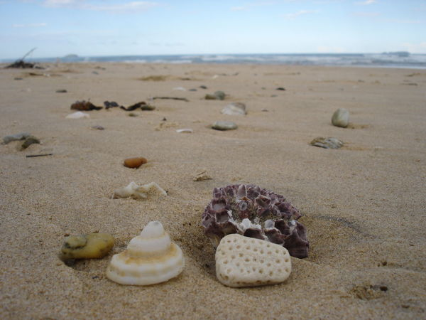 Beach Beauty In Nature Close-up Coral Day Nature No People Outdoors Pebble Sand Sea Sea Life Seashell She Shore Sky