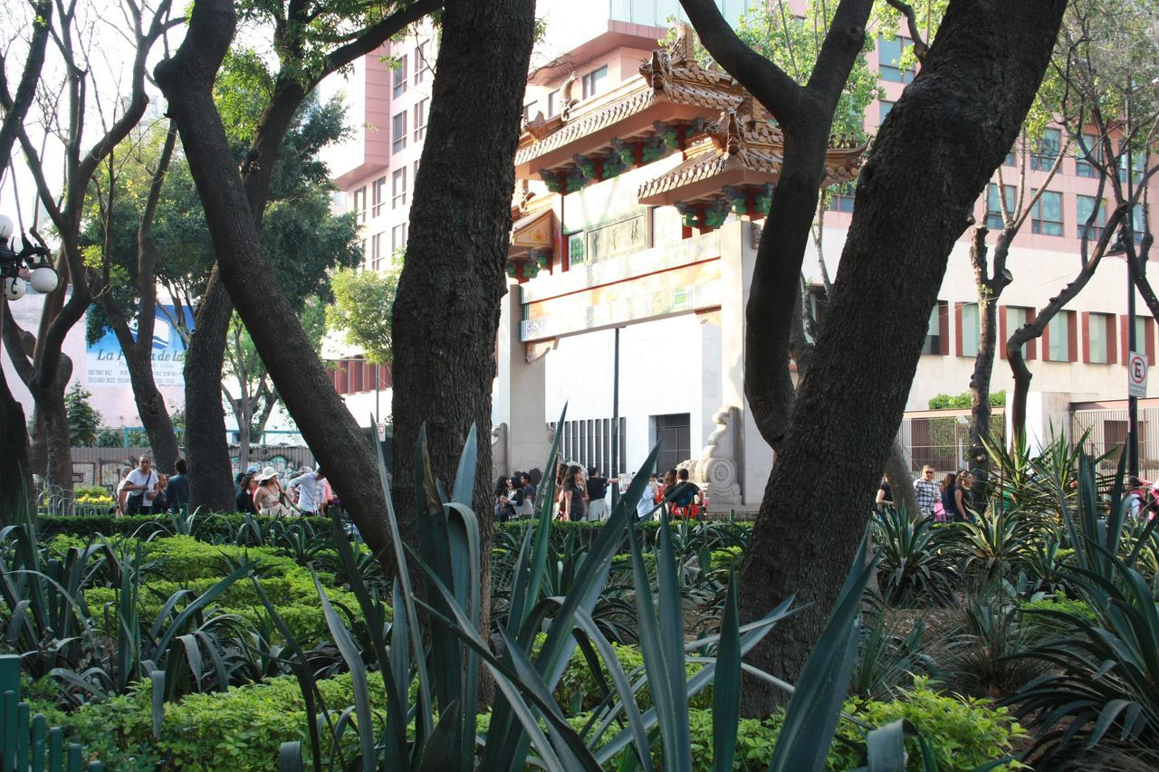 The mixture between Mexican cactus plants and Chinese architecture. Arch Architecture Cactus Chinese Architecture Chinese Culture Chinese New Year 2017 Day Growth Mexicocity  Nature No People Outdoors Park Plant Tree Urban