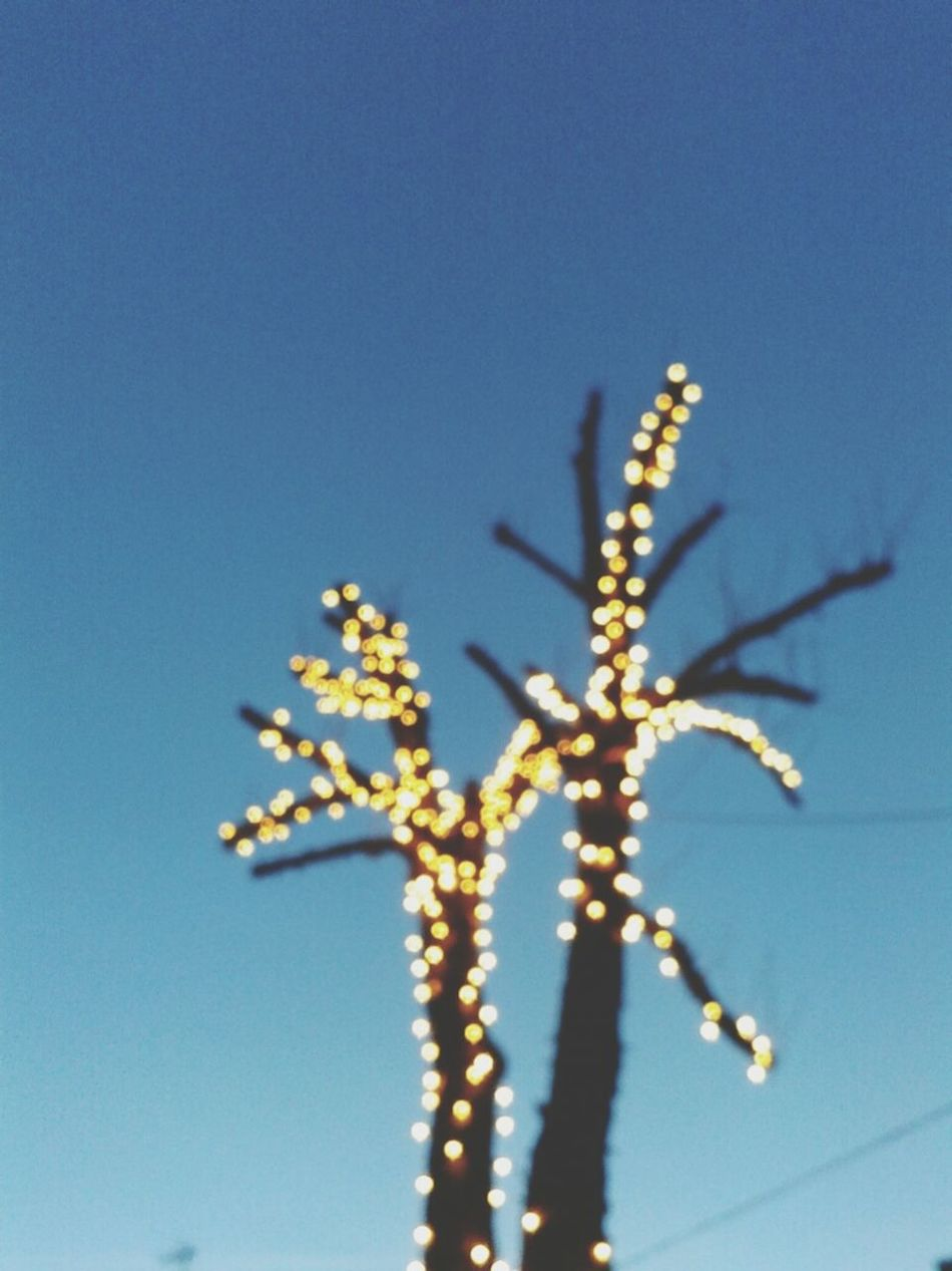 Beautiful stock photos of space, Bare Tree, Blue, Christmas Lights, Clear Sky