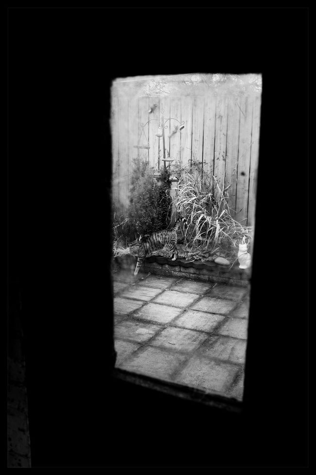 Window No People Old Shed Window Cat Pip The Monster In His Mind He's A Tiger Blackandwhite Holywood County Down Northern Ireland FUJIFILM X100S