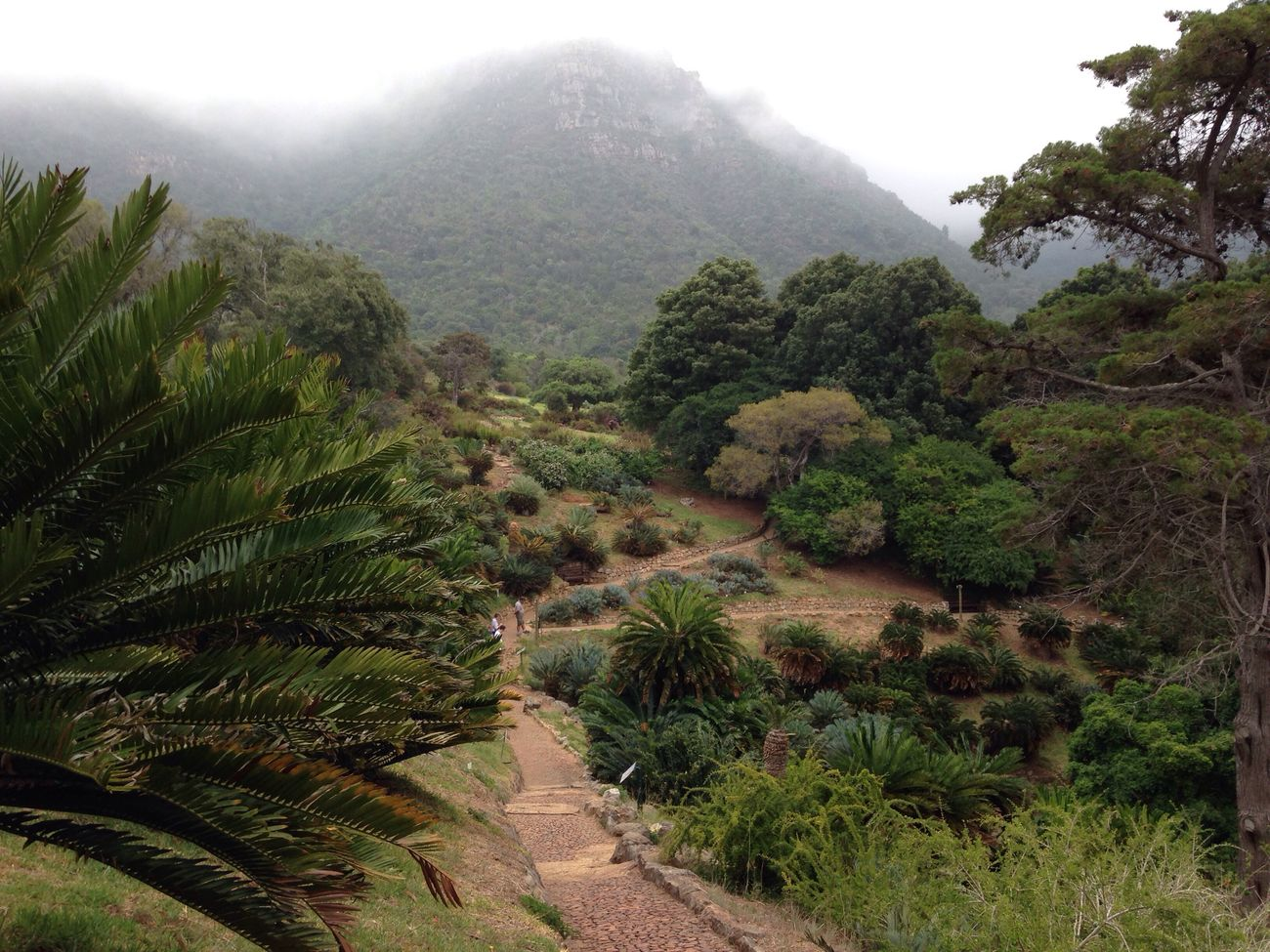 First Eyeem Photo Travel Tablemountain Roadtrip South Africa Cape Town Kirstenbosch Fog Botanical Gardens