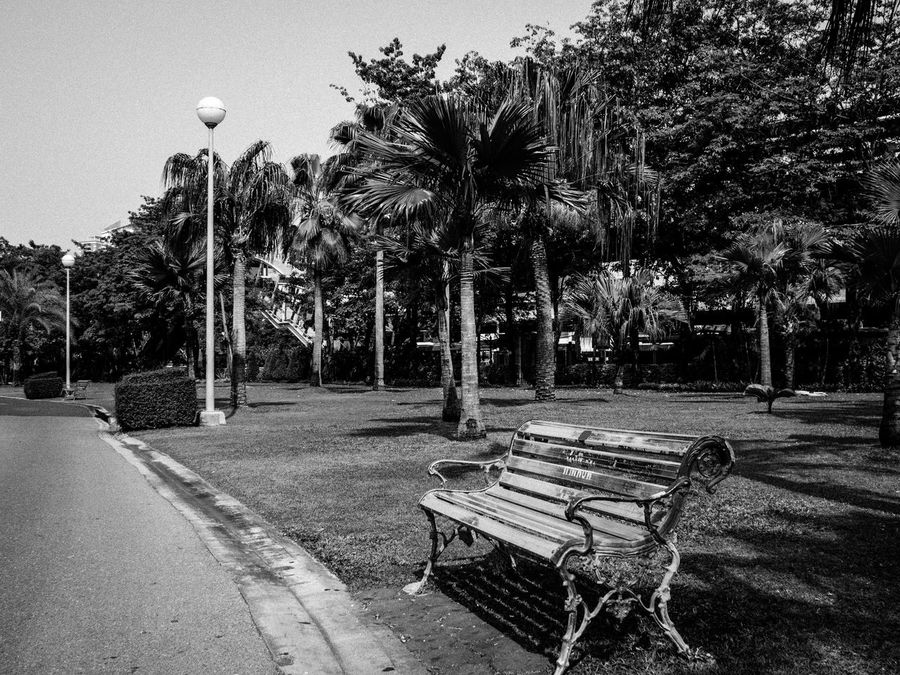 Absence Bench Blackandwhite Chair Clear Sky Day Empty Spotted In Thailand Jatujak Park First Eyeem Photo Growth Here Belongs To Me Nature Outdoors Park Park - Man Made Space Park Bench Seat Shadow Sky Street Light Sunlight The Way Forward Tranquility Tree