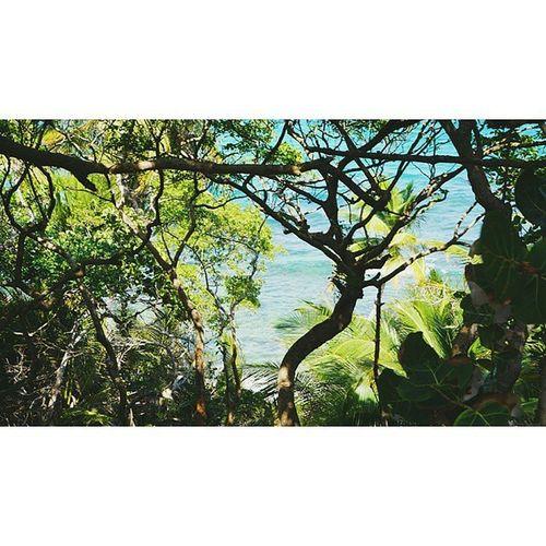 Lastone Nowyouknow Oceanwater Caribbean