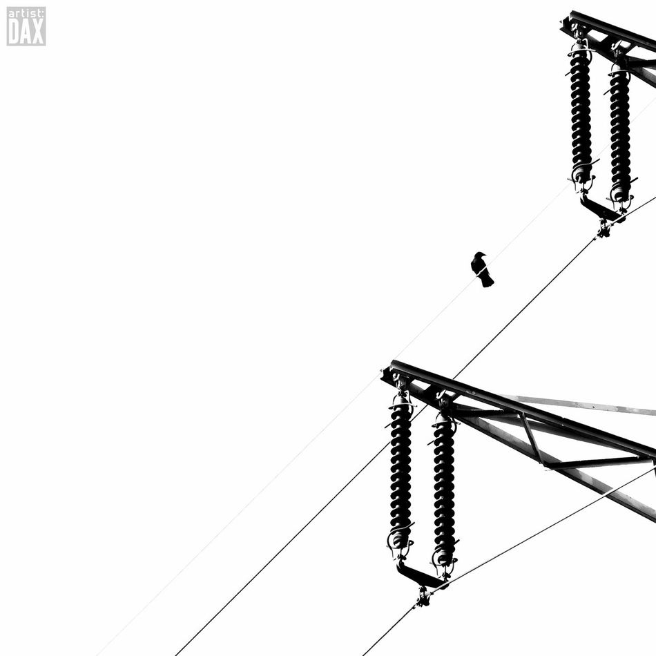Bird on a wire artist:DAX PHOTOGRAPHOHOLIC I born to capture | Cable Low Angle View Electricity  Silhouette Hanging Day Outdoors Electricity Pylon No People Clear Sky Sky Minimalism Minimal EyeEm Gallery ArtistDAX Simplicity Minimalmood Minimalistic
