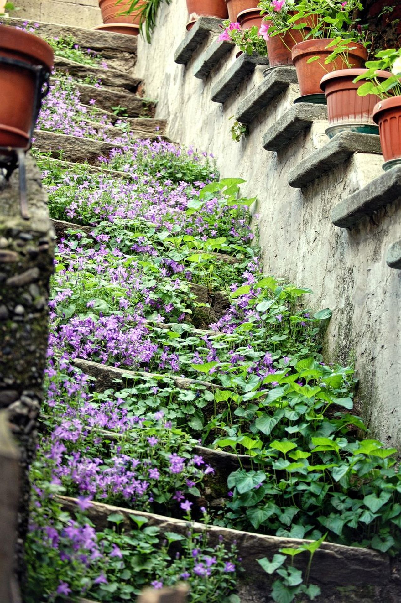 Stair Stairway Plant Flowers Architecture Built Structure Beauty In Nature Freshness Outdoors High Angle View No People Nature Mountain Village From My Point Of View