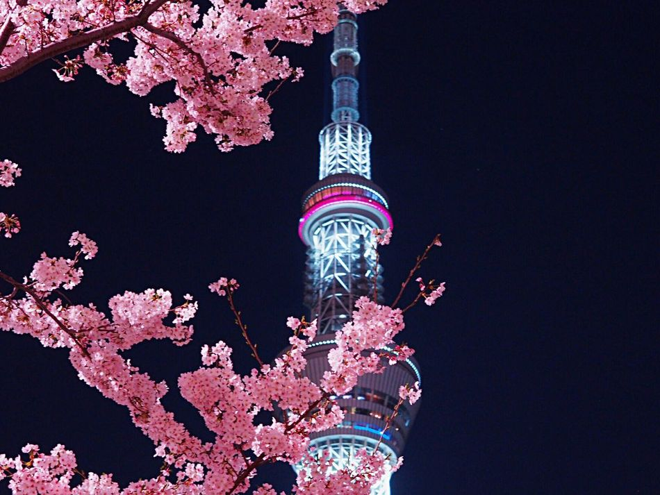 https://youtu.be/VPRjCeoBqrI Night Tower City Architecture Built Structure Illuminated Sky Nature Beauty In Nature Cherry Tree Cherry Blossom Sakura 桜 Blossom Blooming Tokyoskytree Skytree 東京スカイツリー Springtime Nightphotography Night Lights Japanese Photography Japanese Landscape Tokyo,Japan Olympus Om-d E-m10