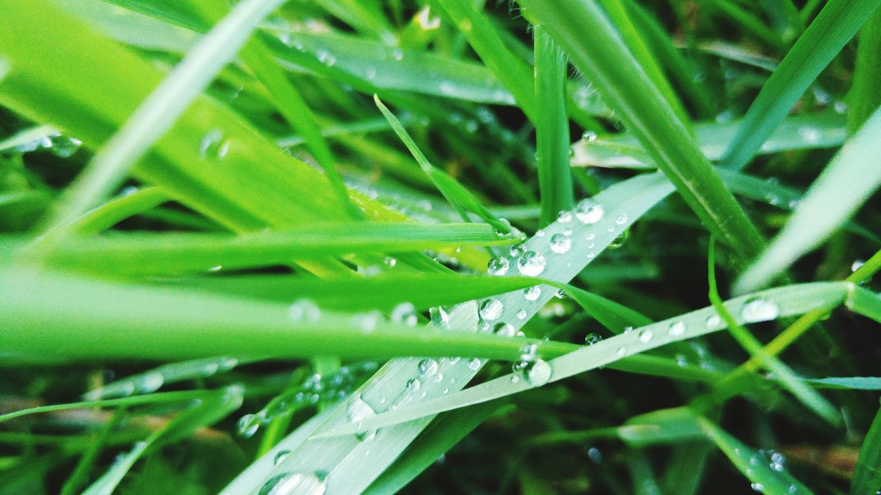 """Amazing how the smallest things, can have have the biggest impact.""Taking Photos Enjoying Life Water Waterdrops Grass Blades Macro Beauty Fresh LG G4 First Eyeem Photo Mobilephotography Natute"