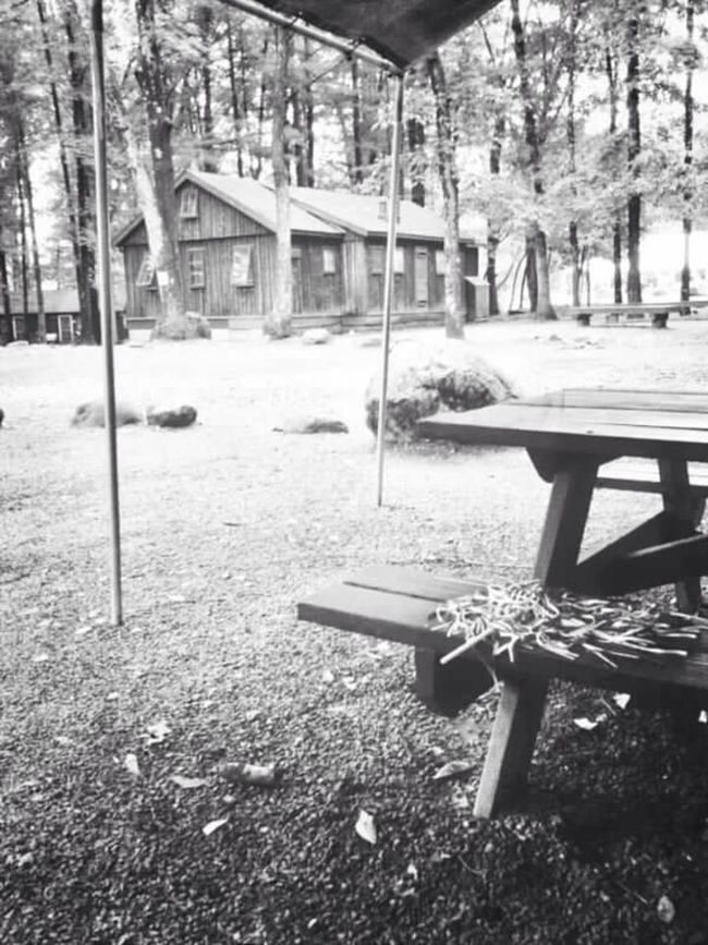 Bench Black And White Cabin Camp Camp Mason LMTI No People Outdoors Woods