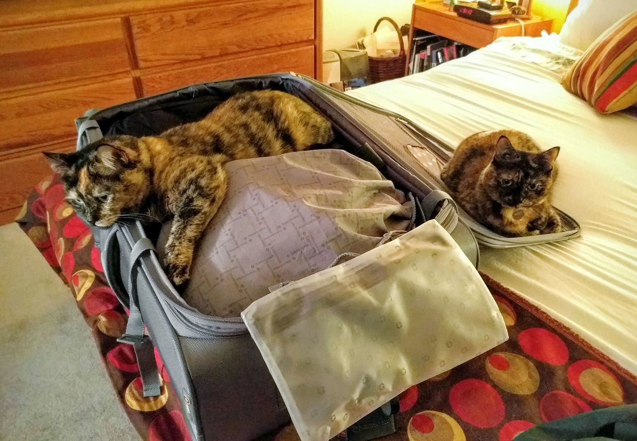 My cats don't want me to leave! Hanging Out Cat Animals January2016 Traveling Packing My Suitcase Packing Cats Departure Departing Sad Showcase: January Suitcase Pets Travel Travel Photography Sad & Lonely Sadness Catsofinstagram Kitties Cats Of EyeEm Cat Lovers Tortoiseshell Cat Tortiecat